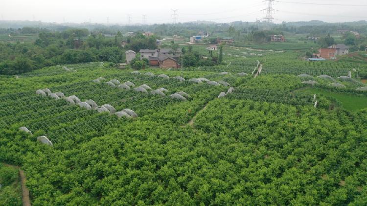 重庆铜梁:集体经济壮起来 群众
