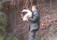 有爱!大爷捡只鸭子当宠物,天天遛弯还钓鱼喂它