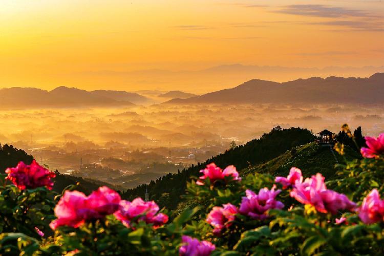 山野中的牡丹.jpg