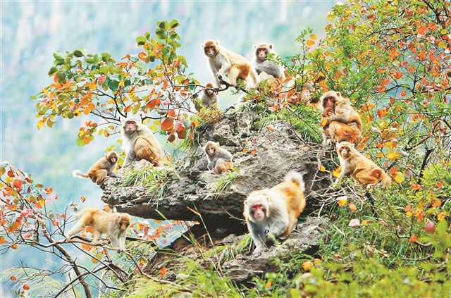 小三峡猕猴.jpg